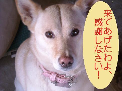 004 -  あず姫P
