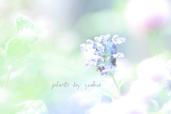 庭の花。 820-1