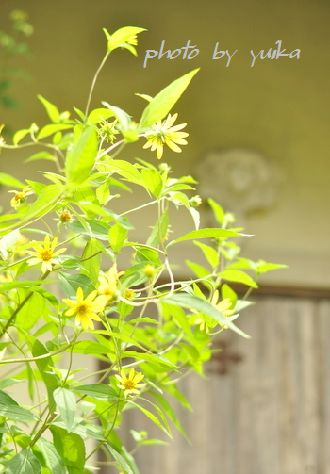 優しイイ花。 824-2
