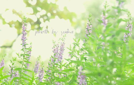優しい花824-1