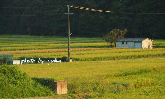 田園風景922-1