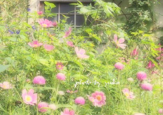 ピンクの花壇1007-2