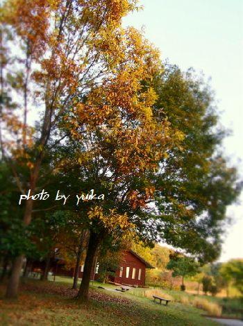 秋の夕暮1121-1