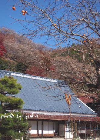 四季桜1130-3