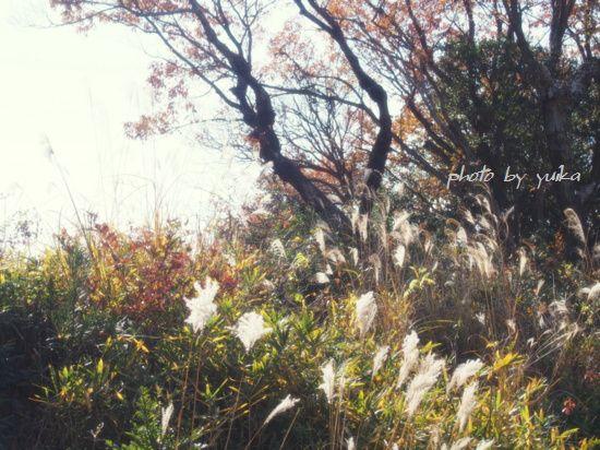 冬景色1214-1