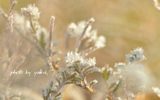 霜の花0105-2
