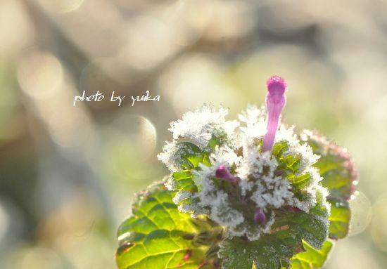 霜の花105-1