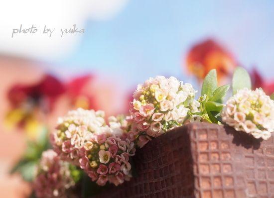 春1012-002
