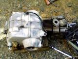 KC362218.jpg