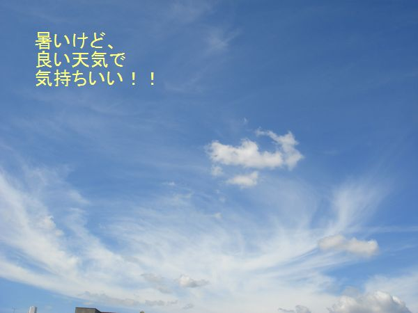 DSC06339.jpg
