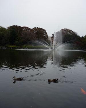 2011-10-30-3.jpg