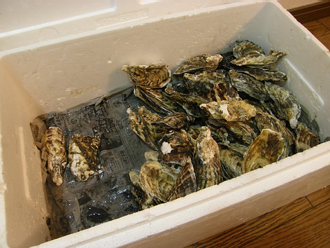 2009、おすそ分けした生牡蠣