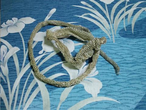 100531-2蛇皮1