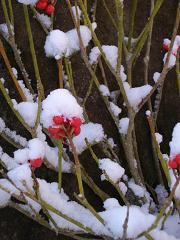 赤い花2010年02月02日_ALIM0124
