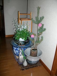 ひばち2010年02月27日_ALIM0159
