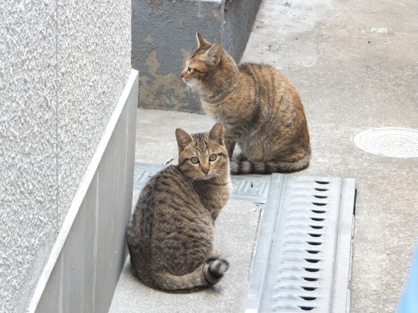 猫12,13