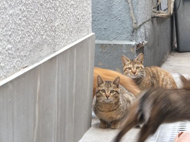 猫12,13,14,15