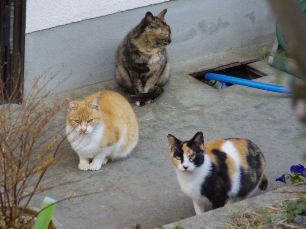 猫2,5,6