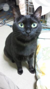 妹ネコ ジジ