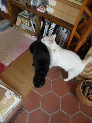 シロとキキ シンクロ