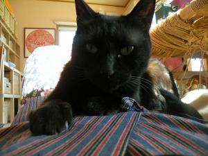 黒猫キキ おなかの上