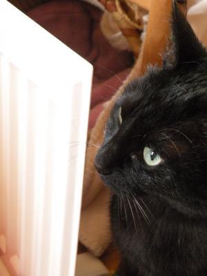 黒猫キキ 横顔