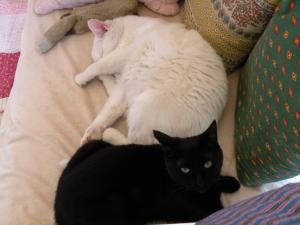 シロさんとキキ お昼寝