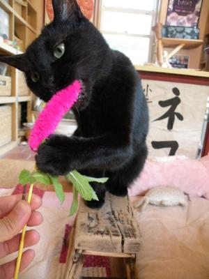 黒猫キキ ピンクの猫じゃらし