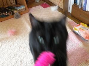 黒猫キキ ぶれぶれ