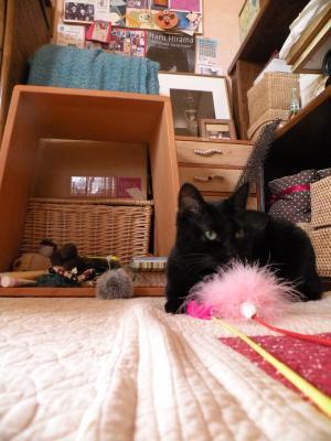 黒猫キキ ピンクの猫じゃらし 遠景