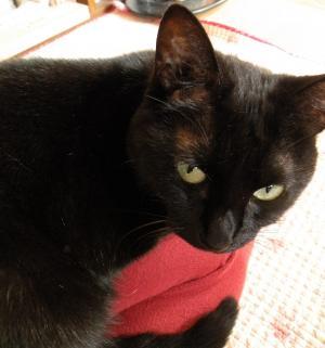 黒猫キキ お膝のうえ