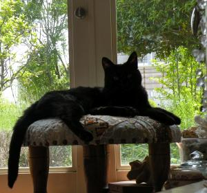 黒猫キキ シルエット