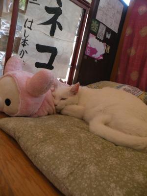 シロさん 狸寝入り