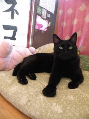 黒猫キキ 座布団の上