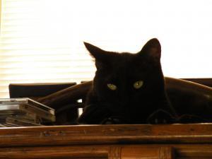 黒猫キキ 暑い日の棚の上