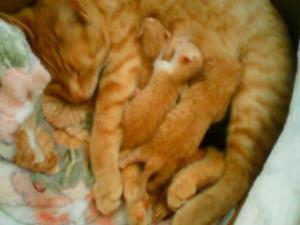 プーちゃん出産4匹
