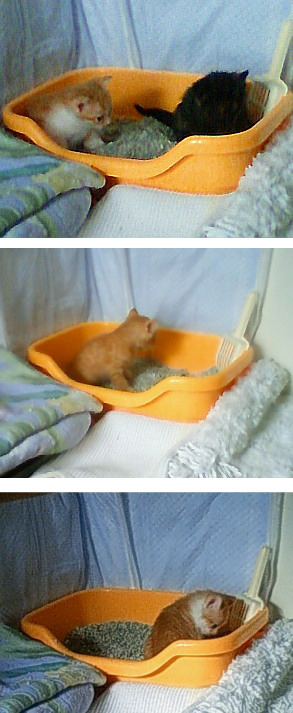 子猫たちのおトイレ