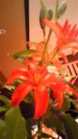20110529flower