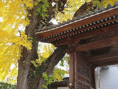 お寺の大銀杏