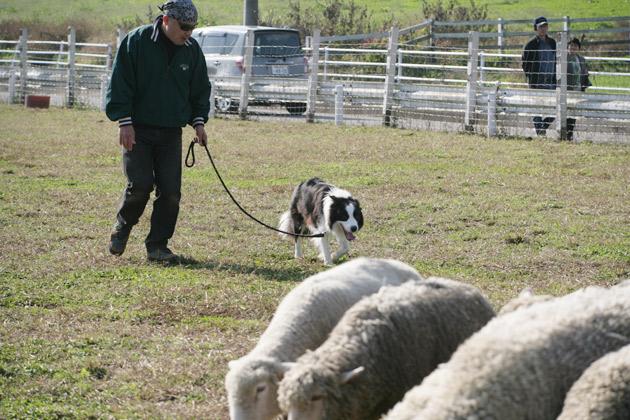 sheep2_20091122183715.jpg