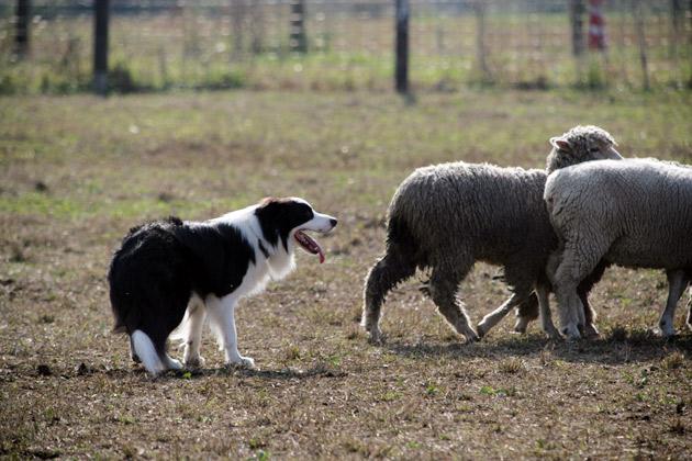 sheep3_20091122183715.jpg