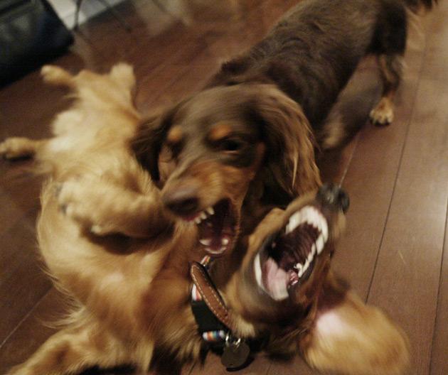 dogfight.jpg