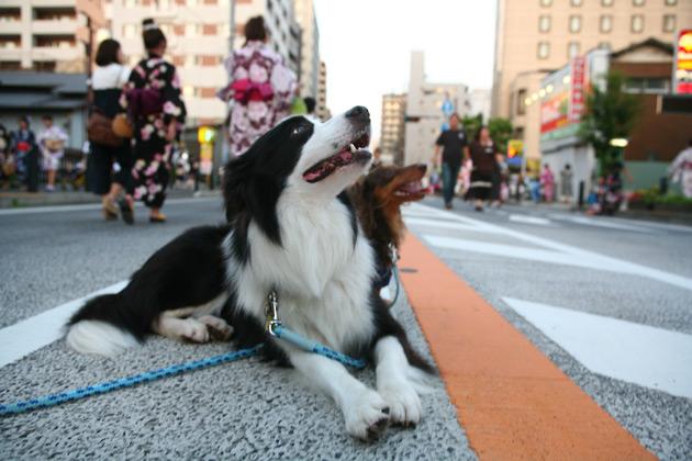hanamichi1.jpg