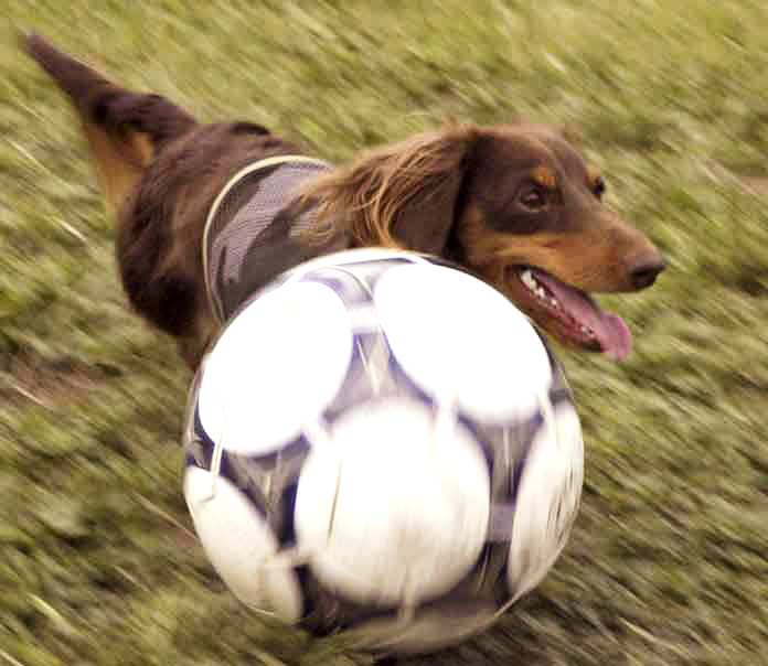 soccerorya.jpg