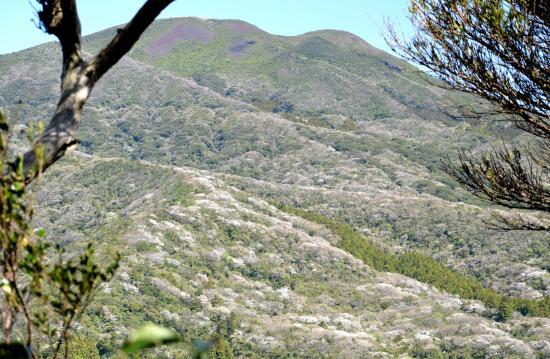 岳ノ平頂上の三角点近くの木によじ登って二子山を写す