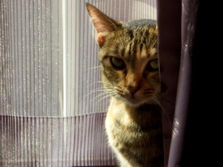 深窓のテラ姫_convert_20101208163303