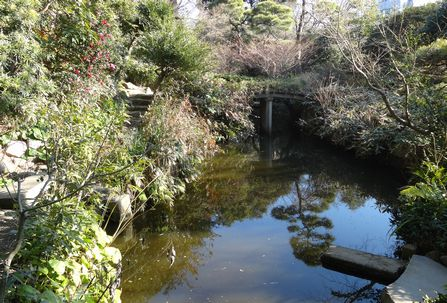 自然豊かな池