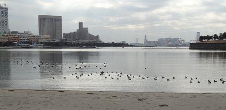 お台場海浜公園の水<br />鳥