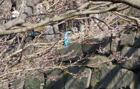 近くの木の枝に来た