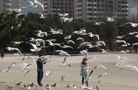 海鳥が舞う